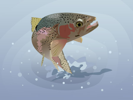 Vector Trout done in Photoshop
