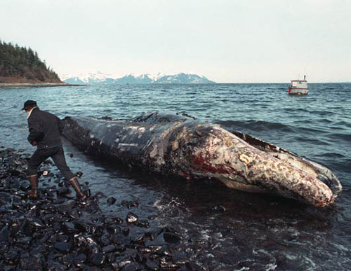 dead whale from Exxon Valdez oil spill