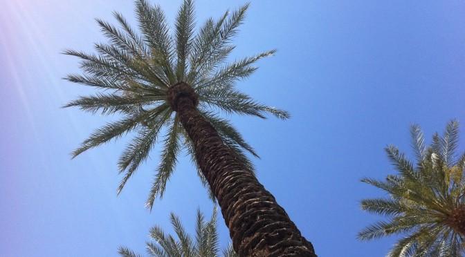 California 2014 – Day 7