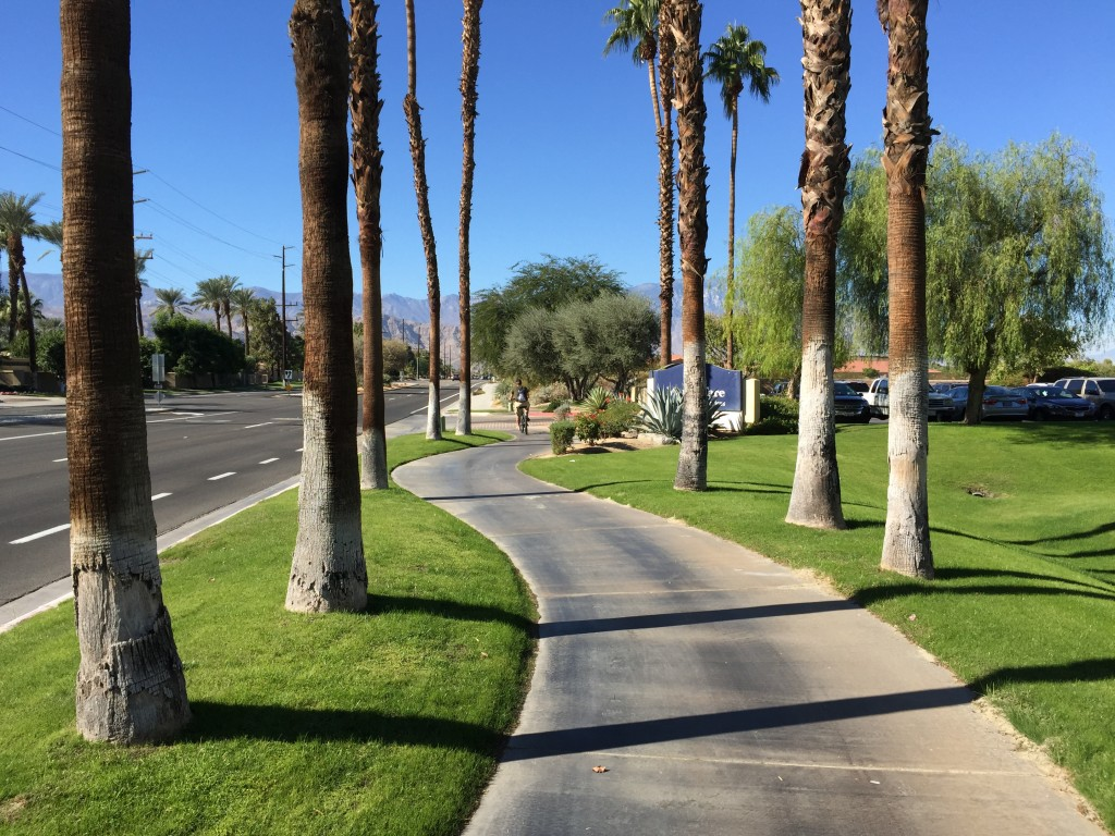 A windy path, bright green grass, and palm tree trunks near an empty but wide road.